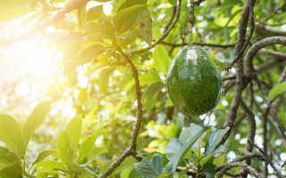 Полезные свойства авокадо, о которых стоит узнать