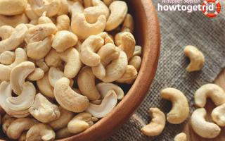 Польза и вред орехов кешью для человека