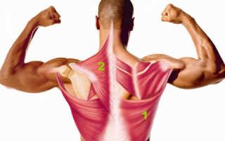Как накачать верх спины