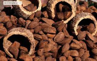 Полезные свойства и противопоказания к употреблению бразильского ореха