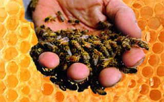 Пчелопродукты на страже здоровья человека: лечимся без таблеток