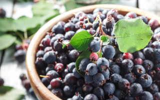 Полезные свойства плодов ирги и противопоказания к употреблению
