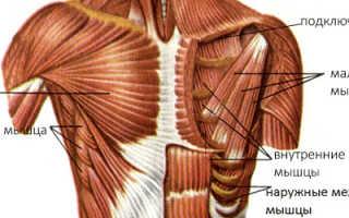 Изолирующие упражнения на грудь
