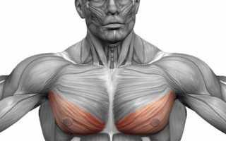 Как отжиманиями накачать нижнюю часть грудных мышц