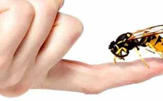 Лечение укусами пчел – апитерапия