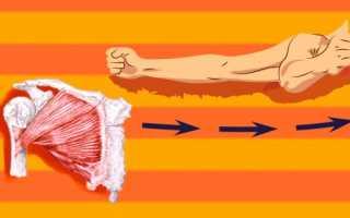 Как быстро накачать быстро грудь руки