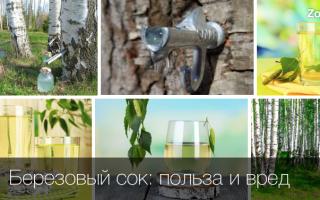 Чем полезен для организма берёзовый сок?