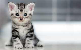 Как быстро приучить кота к лотку