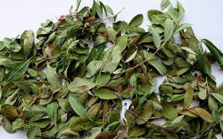Состав, полезные свойства и противопоказания к употреблению брусничного листа